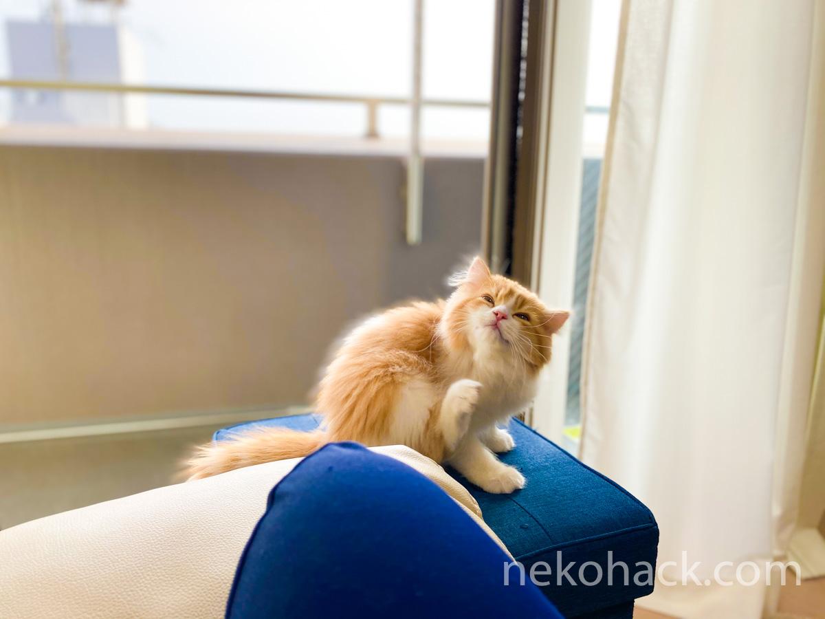 猫初心者が猫に好かれたい『ねこはっく』