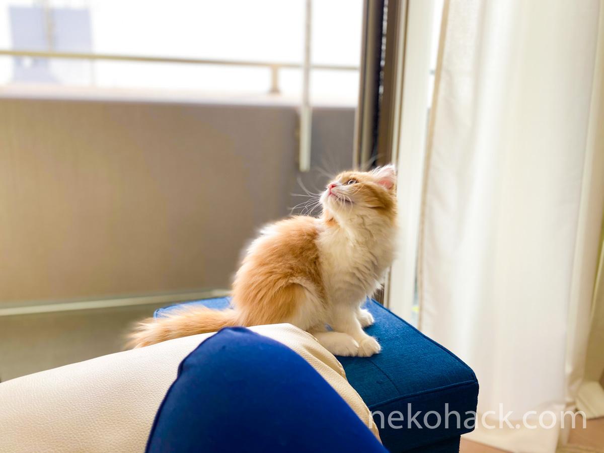 ブログを通じて猫好きさんと繋がれたら幸いです