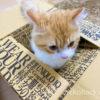 【うちで過ごそう】外出自粛・自宅待機なのでおウチで子猫と沢山遊ぶ!
