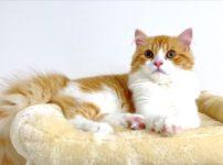 ウチの子猫「きなこ」が初めてケガをして動物病院へ行ってきた話