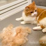 【抜け毛対策】猫用ブラッシング『ファーミネーター』を使ったメリット・デメリットを口コミ