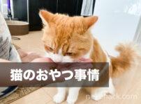 きなこの頑固な猫おやつ事情。みなさんの猫ちゃんはどんなおやつが好みですか?