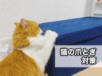 子猫から成猫まで育てて分かった!賃貸マンションでの『猫の爪とぎ対策』がこちら!
